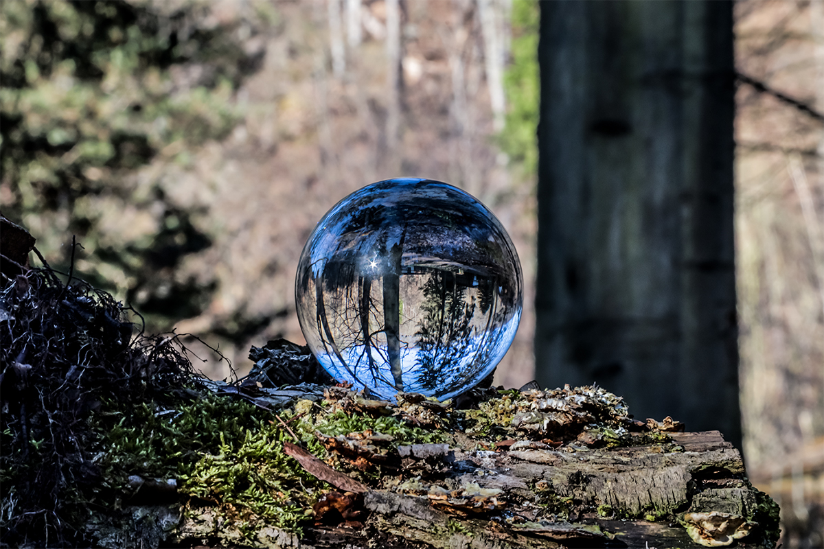 Lens Ball im Wald