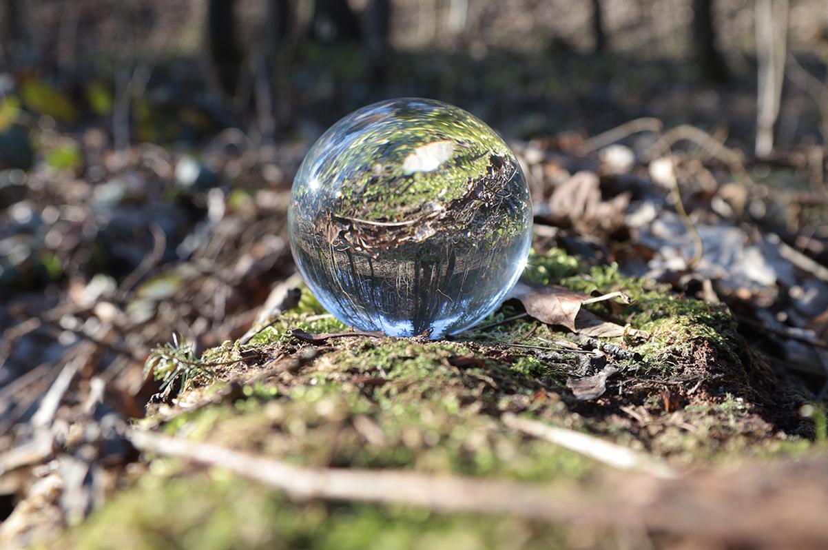 Lens Ball im Moos