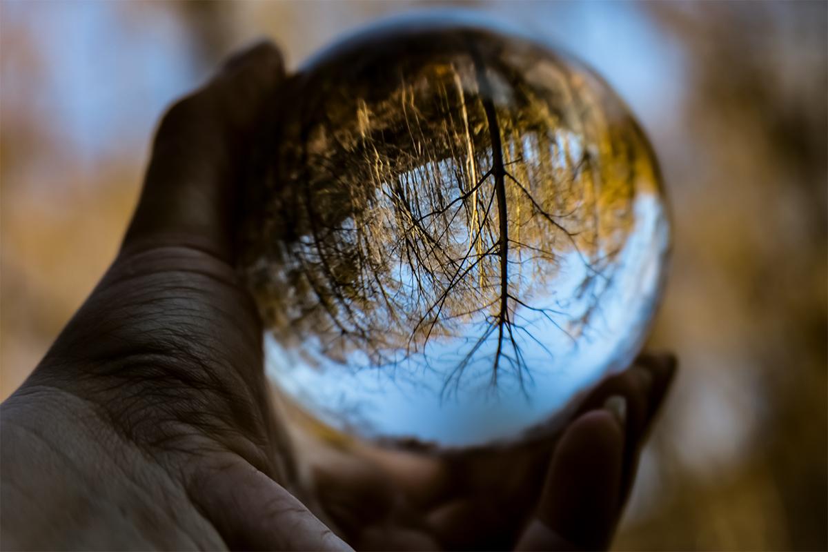 Wald im Lens Ball gespiegelt