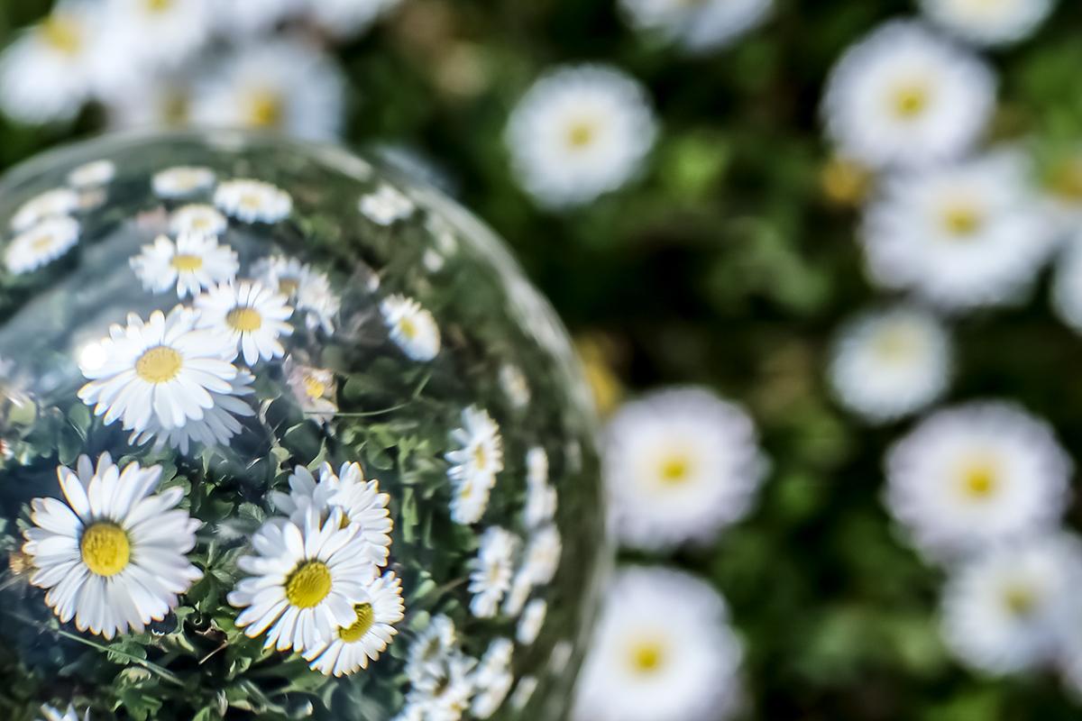 Lens Ball mit Gänseblümchen