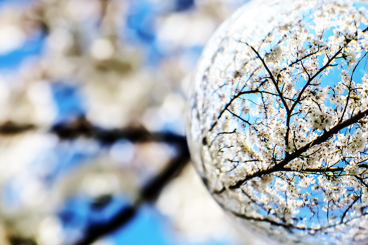 Bildausschnitt Lensball mit Kirsche