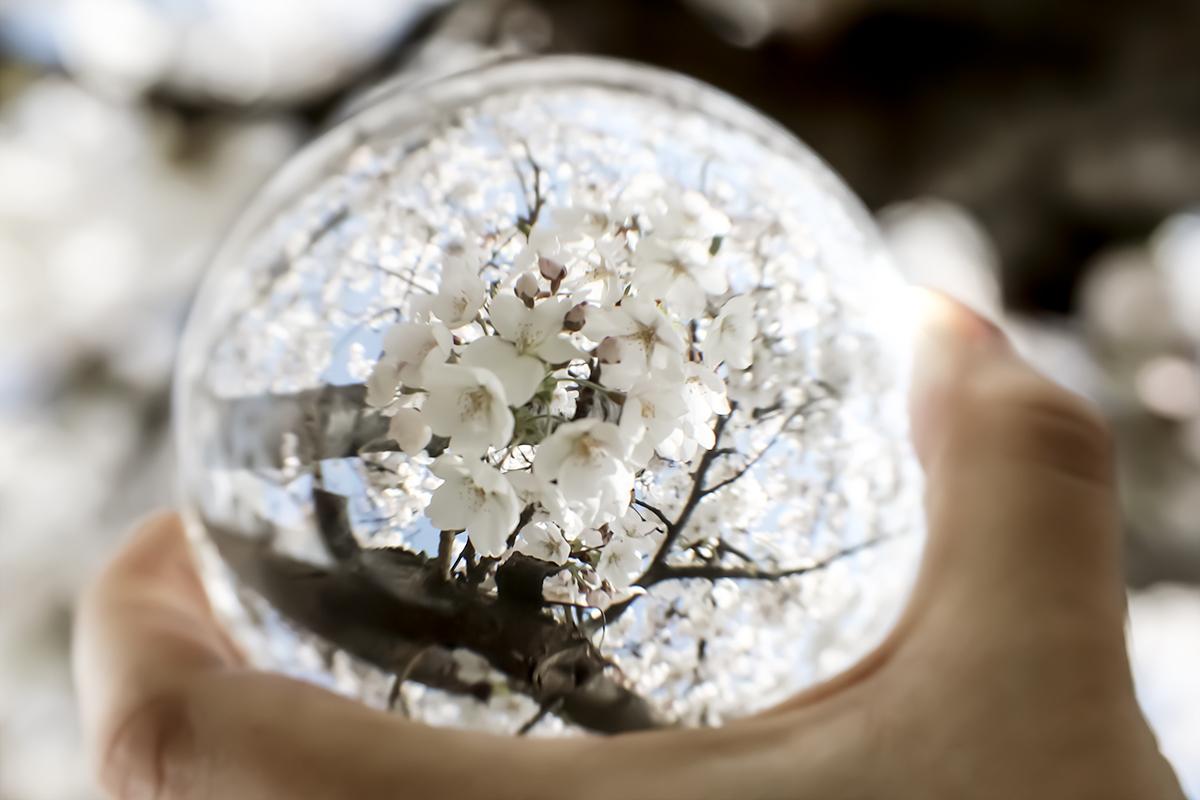 Bildausschnitt Lensball mit weißen Blüten