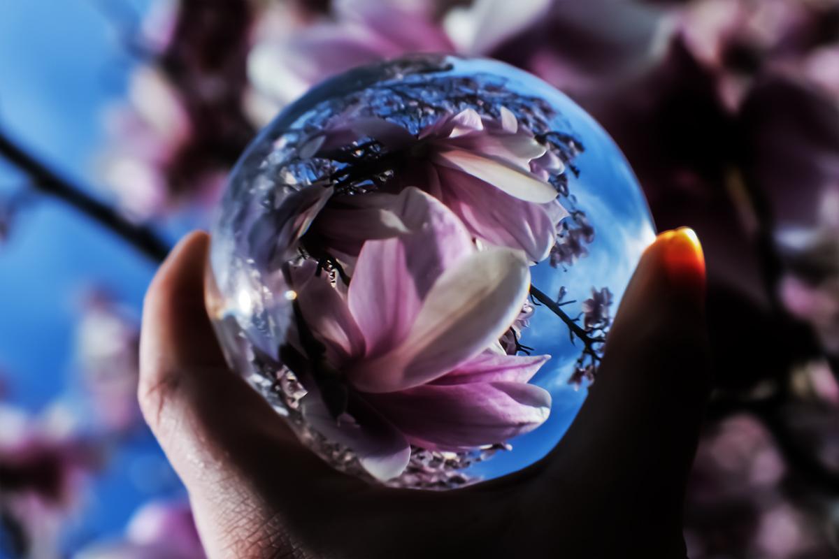 Lensball mit Magnolienblüten