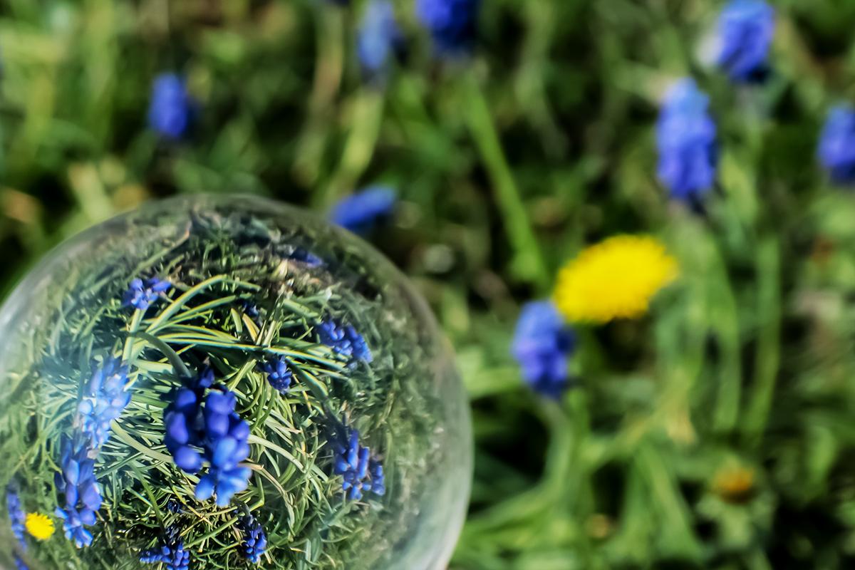 Lensball mit Traubenhyazinthen