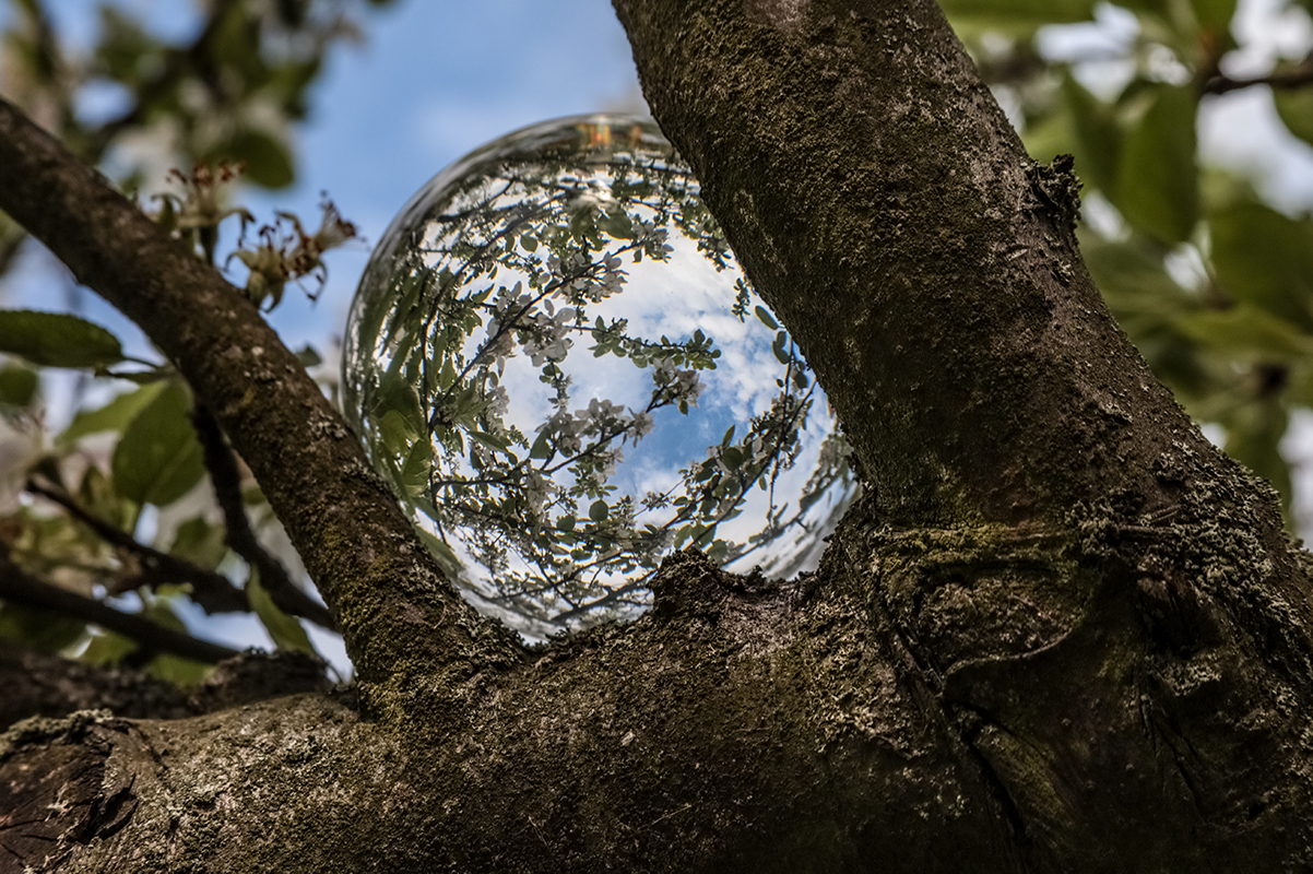 Lensball im Geäst mit blauem Himmel