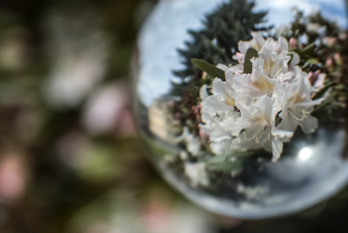 Lensball mit Rhododendron