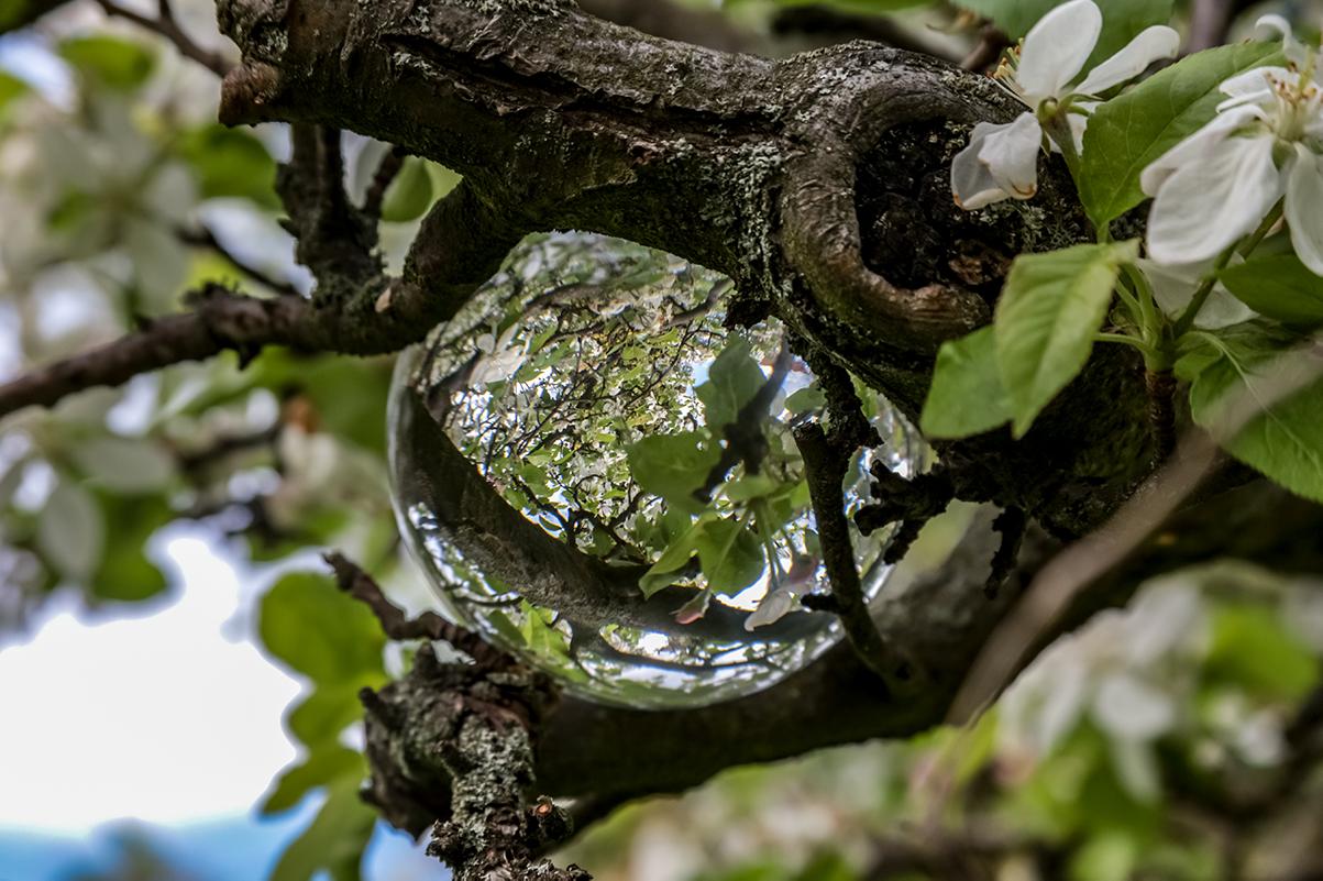 Lensball in Astgabel