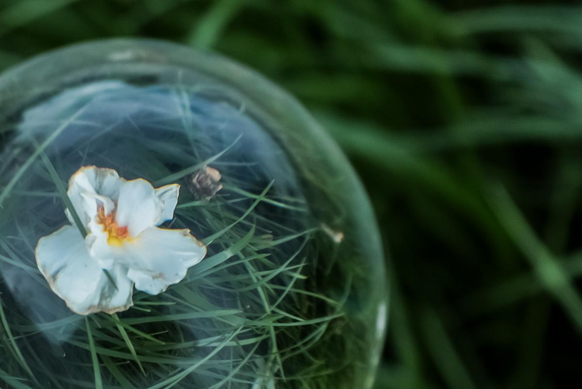 Lensball mit weißer Tulpe