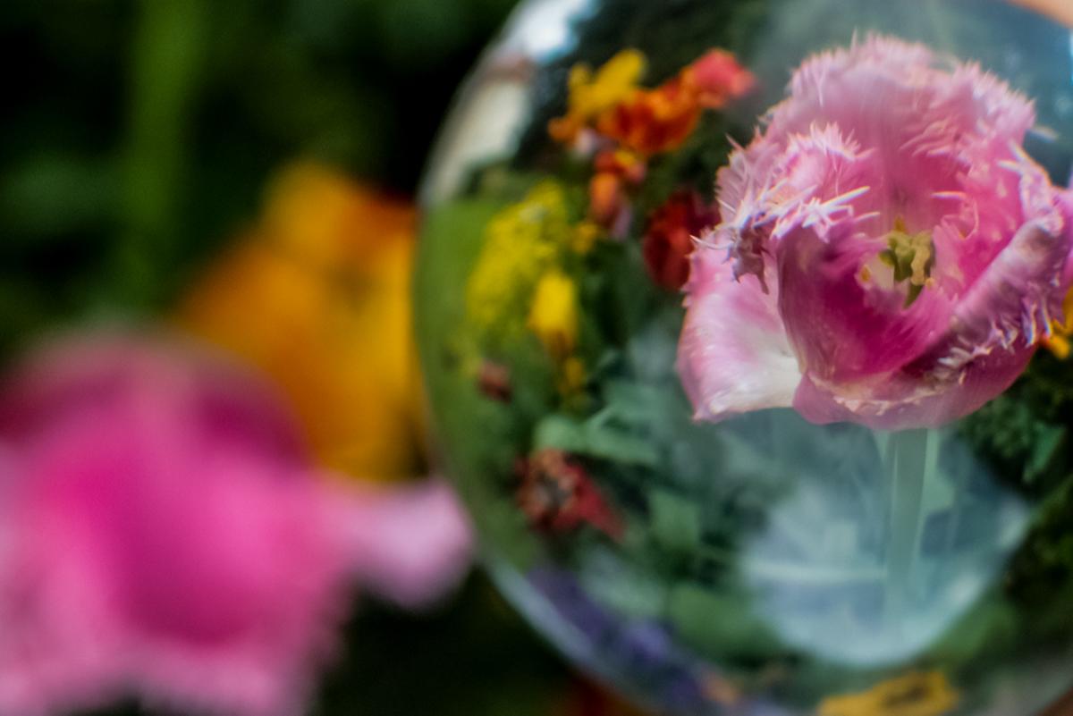 Lensball mit rosa Tulpen
