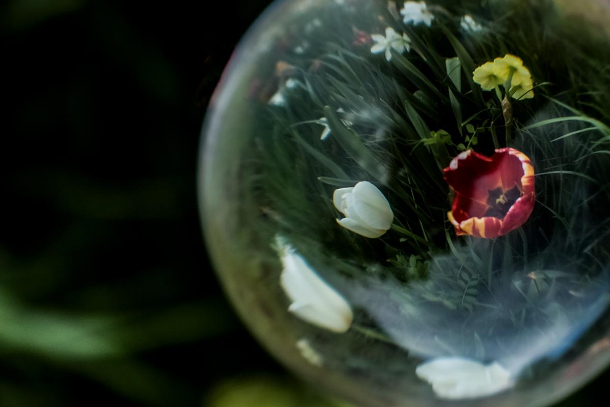 Lensball mit roten Tulpen